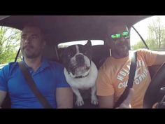 Take Me To Church by Junior the French Bulldog and his 2 guys. Walter, Junior, and Emanuele all love life and singing together in their travels!