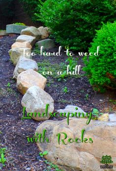 Too hard to weed on a hill, so we are landscaping with rocks and boulders