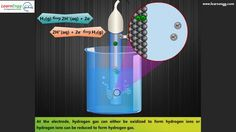 Standard Hydrogen Electrode (SHE) Engineering Subjects, Hydrogen Gas, University, Canning, Website, Blog, Home Canning, Colleges, Community College