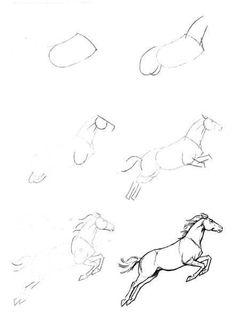 Sketch - horse anatomy