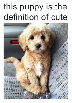 Funny Pictures: Definition of cute