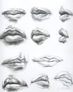 Image result for mouth anatomy drawing - #anatomy #Drawing #image #mouth #result