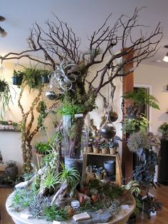 Tillandsia table: help us grow our tree, guest book