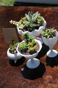 I am making these succulent planter arrangements for table and aisle decor using a mix of white milk glass goblets and planters like these and white bonsai tree planters. Succulents In Containers, Cacti And Succulents, Planting Succulents, Planting Flowers, Glass Containers, Succulent Bowls, Succulent Gifts, Succulent Centerpieces, Succulent Arrangements