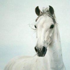 Interview: Sabien Delhez – Paard Verzameld
