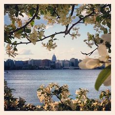 Madison - view from Olin Park