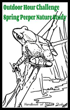 Spring Peeper Outdoor Hour Challenge nature study @handbookofnaturestudy Primary Science, Teaching Science, Frog Drawing, Frog Tattoos, Animal Tracks, Spring Nature, Nature Study, Zoology, Fun Learning