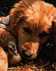 Sleeping with the Enemy-Puppy & Duckling : Wild Wings