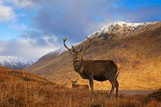 The Cairngorm National Park is the largest National Park in Britain. This site has a Cairngorms brochure! Montana National Parks, National Parks Map, Banff National Park, National Trust, Lake District, South Dakota, Grand Canyon, Vietnam, Art In The Park