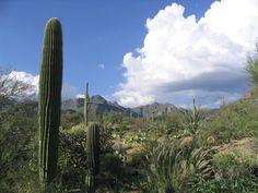 Sabino Canyon (Tucson) - 2018 All You Need to Know Before You Go (with Photos) - TripAdvisor