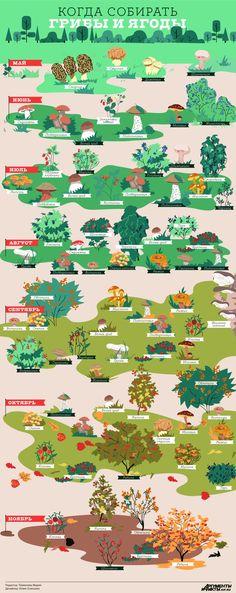 Когда собирать шампиньоны, а когда – опята. Расписание лесного урожая | Продукты и напитки | Кухня | Аргументы и Факты