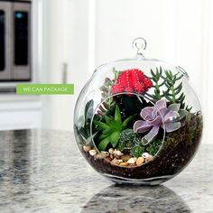 16 Inspirational Ideas How To Make A Perfect Terrarium On Your Own