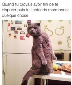 Funny Memes Animals Hilarious Lol 55 Ideas For 2019 Memes Humor, Funny Animal Memes, Funny Animal Pictures, Funny Animals, Cute Animals, Funny Memes, Animal Jokes, Animal Pics, Funny Shit