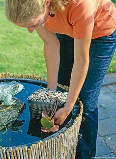 Planter des plantes aquatiques : le nénuphar dans le bassin #lebongeste