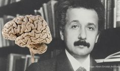 Here's How Einstein's Brain Differed From An Average Person's | @curiositydotcom