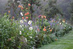 Prachtige herfstborder met verschillende Dahlia's en Salvia's.