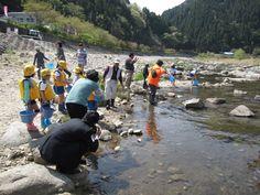 写真: 先日、観光案内所の裏の矢作川で毎年恒例の「稚鮎の放流」が行われました。小渡小学校の1~3年生15名の元気な子供たちが、同じくらい元気な稚鮎を「大きくなってねっ!!」声をかけながら、放流してくれました。 https://www.facebook.com/kankou.asahi?fref=ts