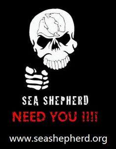 Sea Shepherd Need You !!!!  #seashepherd #taiji #coveguardians