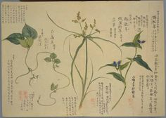 Color atlas of Herbs and flowers, chapter summer vol. 1