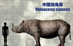 Rhinoceros sinensis by sinammonite.deviantart.com on @DeviantArt