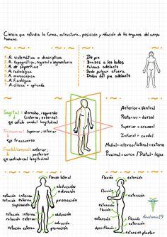 Nursing Student Tips, Nursing School Notes, Med Student, Nursing Students, Medicine Notes, Medicine Student, Human Body Anatomy, Muscle Anatomy, Anatomy Bones