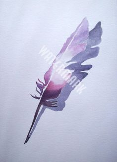 A lilac tone friend of the blue feather.