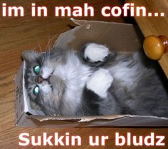 Coffin kittie