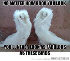 It doesn't matter how good you look… Selective Breeding, Pretty Birds, Love Birds, Beautiful Birds, Weird Birds, Animals Beautiful, Funny Birds, Birds 2, Beautiful Couple