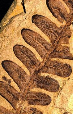 Fern fossil by Kay Berry