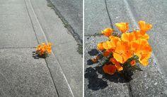 11 foto's die bewijzen dat Moeder Natuur ijzersterk is - Froot. Growing Tree, Growing Flowers, Planting Flowers, Asphalt Pavement, Fleur Orange, Urban Nature, Plantar, Flowering Trees, Types Of Art