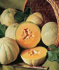 Melon, Charentais