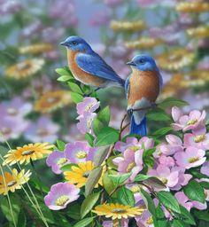 """""""Summer Blues"""" - Eastern Bluebirds by Bradley Jackson"""