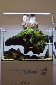 Emersed wood aquascape Source by aquariadise Planted Aquarium, Aquarium Sand, Biotope Aquarium, Aquarium Terrarium, Nature Aquarium, Garden Terrarium, Aquascaping, Fish Gallery, Fish Tank Design