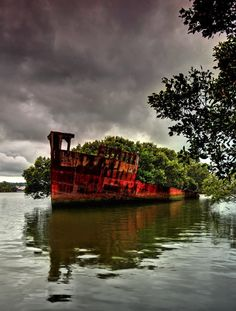 Floating forest on an abandoned ship!