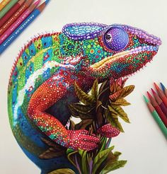 """Chameleon"" - Morgan Davidson, color pencil {reptile drawing #loveart} morgandavidsonart.com"
