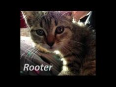 Cute Kitten Rescued from Drain Pipe | Roto-Rooter. this is really sad but at least the kitten was rescued
