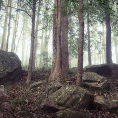 Dark+forest+4