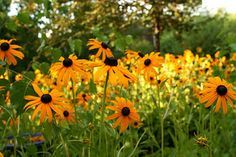 Summer Flower Jokes: Hold Your Nose!Why couldn't the flower ride a bike? Because its pedals fell off! #flower #jokes #gardening
