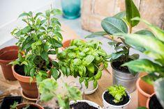 Learn about the joys of small gardens and bonsai plants here! Bonsai Garden, Garden Soil, Herb Garden, Bonsai Trees, Green Garden, Gardening For Beginners, Gardening Tips, Urban Gardening, Culture D'herbes