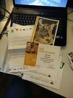 WWF Tiger adoption
