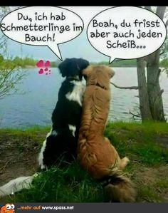 Schmetterlinge im Bauch | Lustige Bilder auf Spass.net Cute Dogs, Funny Cats And Dogs, Funny Bunnies, Funny Animals, Cute Animals, Very Funny, Funny Cute, Pinterest Funny, Funny Buttons