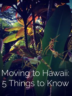 Moving to Hawaii: 5 Things to Know click here: http://passingthru.com/2014/07/moving-to-hawaii-5-things-know/ #hawaii