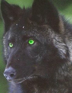 Not very realistic, but pretty.  green wolf eyes - Google Search