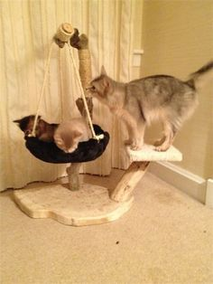 about DRIFTWOOD on Pinterest | Cat Trees, Diy Cat Tree and Cat Cat