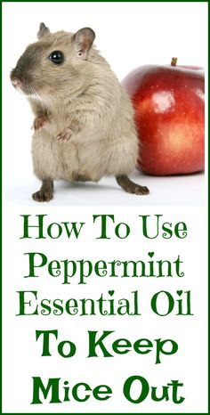 How to use peppermint essential oil to keep mice out of your house. Pest Control, Herbs For Anxiety, Mouse Deterant, House Mouse, Easential Oils, Doterra Essential Oils, Herbal Medicine, Rat Repellent, Peppermint Essential Oil Uses