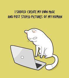 Lingvistov Is Back With 24 Illustrations Summarizing His Life As a Cat Owner - World's largest collection of cat memes and other animals Crazy Cat Lady, Crazy Cats, I Love Cats, Cool Cats, Funny Cats, Funny Animals, Animals Images, Stupid Pictures, Cat Jokes