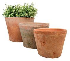 3 large aged terracotta pots (fallen fruits)