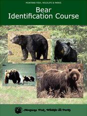 Can you tell the difference between a black bear and a grizzly bear? Take Montana FWP's Bear Identification test.