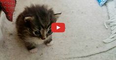 A young woman was feeding the neighborhood's stray cats then one day she found a tiny kitten on her balcony.