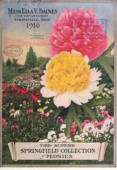 1916 - The superb springfield collection of peonies. - Biodiversity Heritage Library